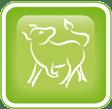 western zodiac taurus
